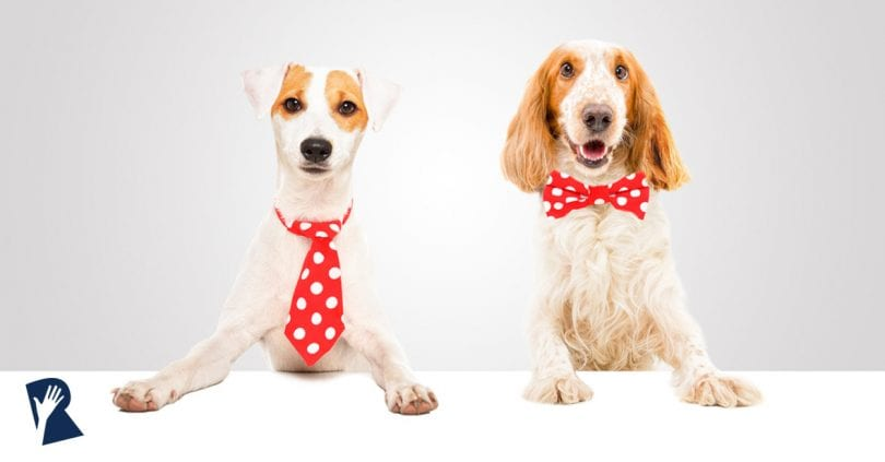 Dogs in a marketing partnership